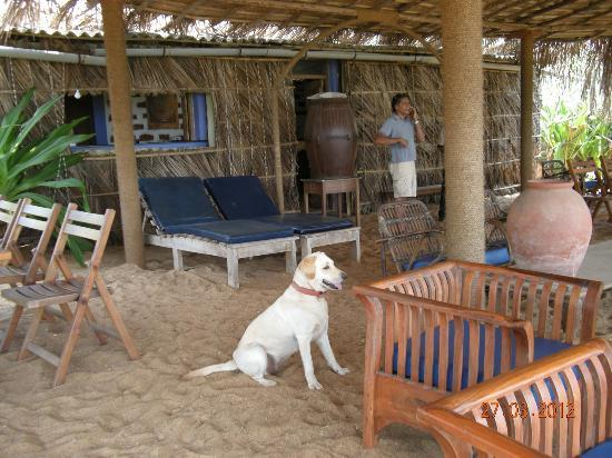 Pousada Tauma: Biscuit and the beach bar