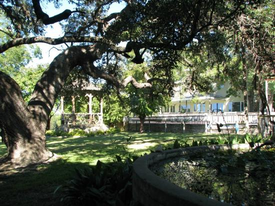 Haven River Inn: Huge Live Oak tree gracing the side yard