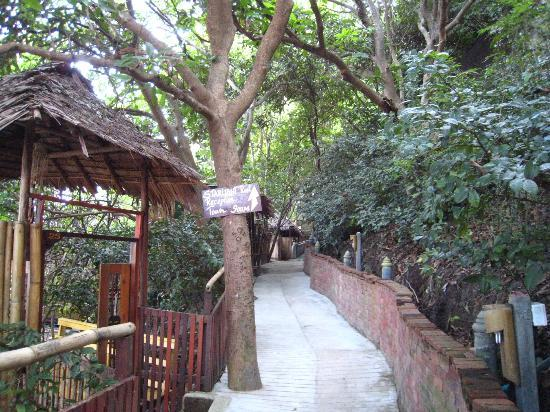 Koh Tao Bamboo Huts: trail view