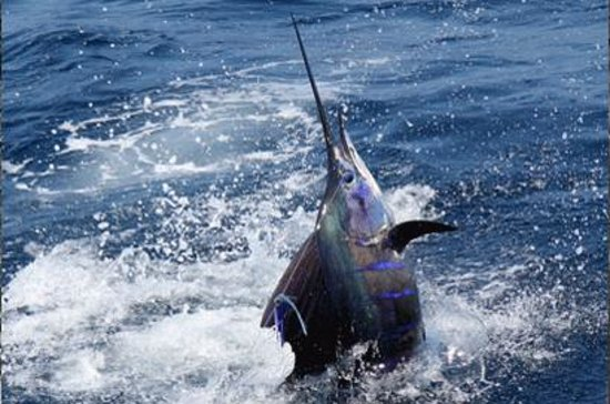 costa rica fishing charters reports jaco address