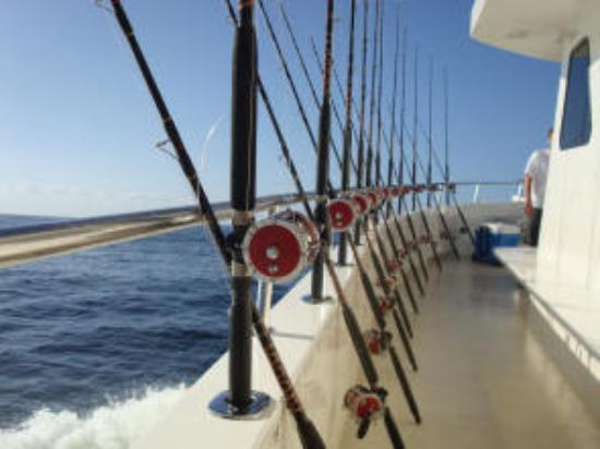 That 39 s my girl picture of majesty deep sea fishing at for Majesty deep sea fishing