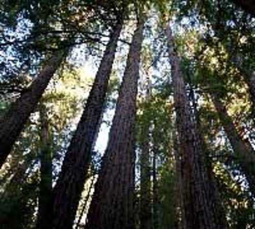 Muir Woods Walking Tours