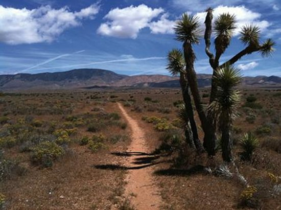 Pacific crest national scenic trail dufur or address phone number