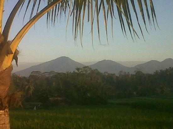 Sawah Sunrise Bed & Breakfast: Early morning view