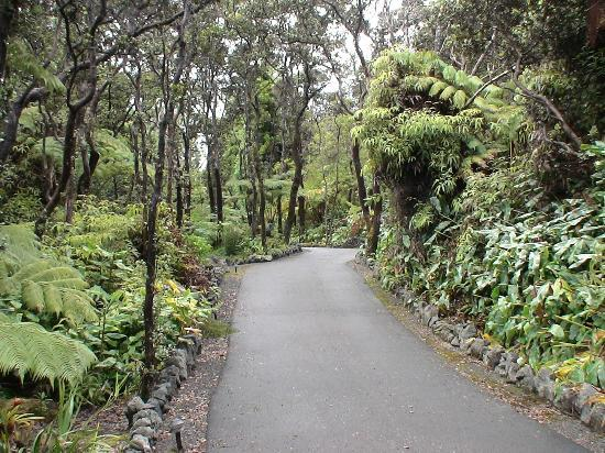 Volcano Country Cottages: The driveway to the cottage