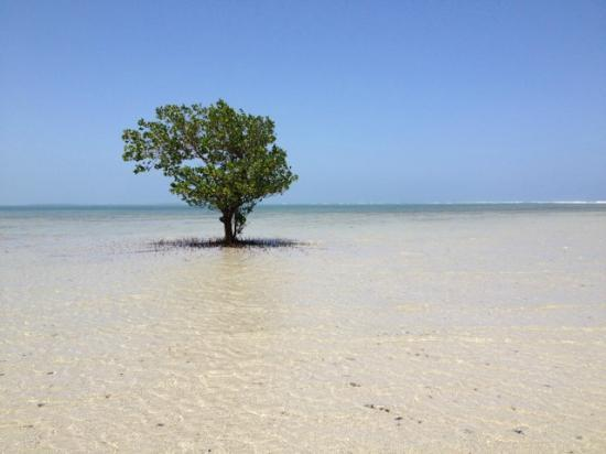 Ras Bamba Eco Lodge: Tree on private beach