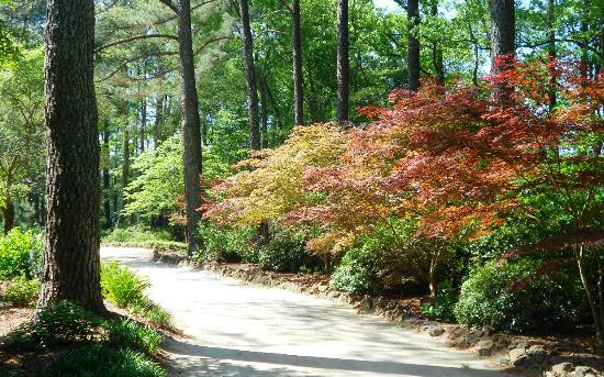 Rhododendron Picture Of Cape Fear Botanical Garden