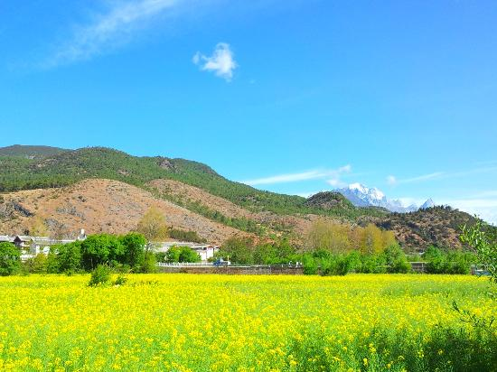 The Bruce Chalet: Blossoming Canola flower field. Very serene place, just 2-3 min walking from Bruce Chalet
