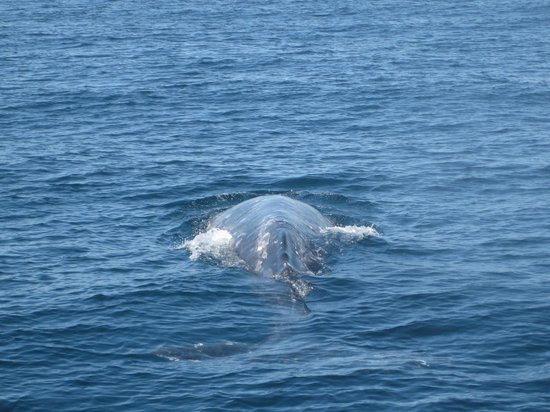 Channel Islands Whale Watching