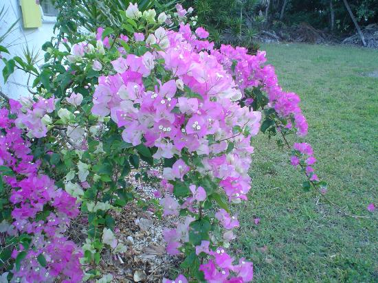 Bonefish Bay Motel: more tropical flowers