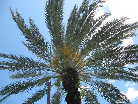 Diamond Resorts Grand Beach: Through the palm tree.