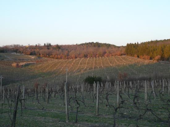La Canonica di Cortine: View from outside the main gate across the fields - very early Spring