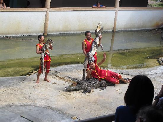 sp10 - Picture of Samutprakan Crocodile Farm and Zoo, Bangkok - TripAdvisor