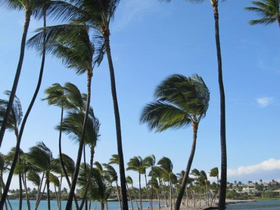 Outrigger Waikoloa Beach Villas: A Bay - blowing palm trees on lovely beach