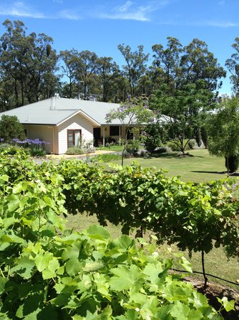 Rosedale Bed & Breakfast: Rosedale through the vines