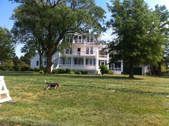 Wades Point Inn on the Bay: The back of the house with their dog Lucy