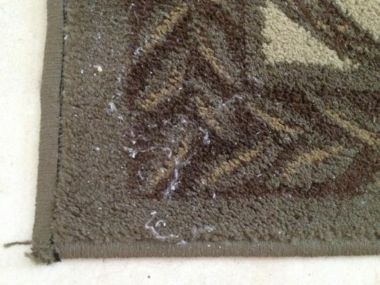 Sea Winds of Marco: Dirty Rug In Master Bedroom