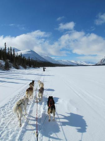 Sky High Wilderness Ranch: Dog mushing across a frozen lake.
