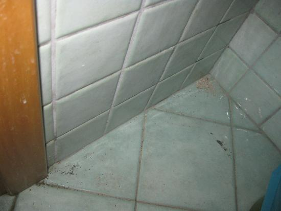 301 moved permanently - Formiche in bagno ...
