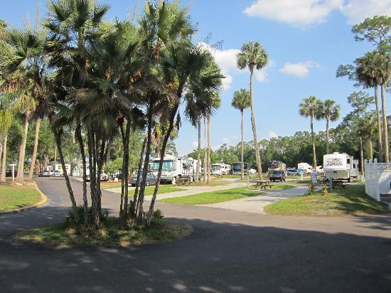 Tropical Palms Resort and Campground: 1 of many pics of site (1000 spots I believe)