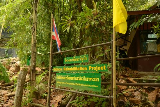 Picture of Khao Phra Thaeo National Park, Thalang District ...
