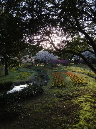 Beppu, Japón: Tulips and Sakura trees