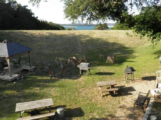 Holiday Lodge on Canyon Lake: BBQs & deer herd