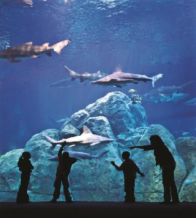 Adventure Aquarium Features The Largest Collection Of