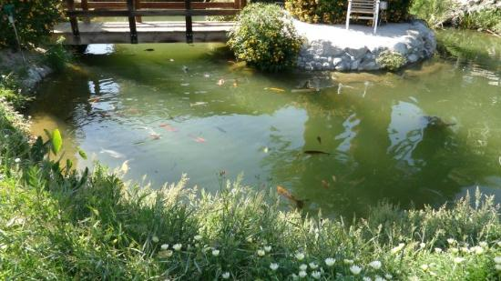 Swiss Health Resort: Koi Pond