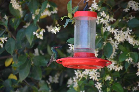 Tanque Verde Ranch: Hummingbird by the Nature Center