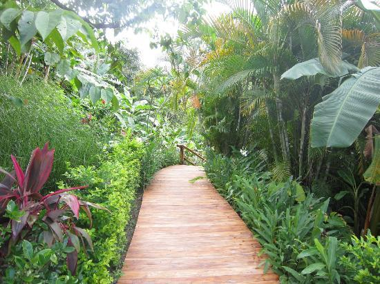 Casa Chameleon: path to villa vista