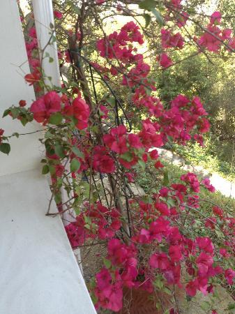 Arroyo Vista Inn: beautiful flowers throughout the property