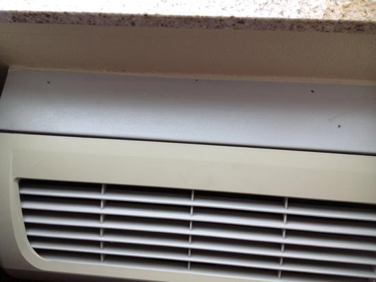 Country Inn & Suites Newport News South: bugs on a/c unit-all not dead in room!