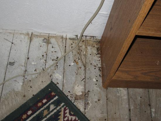 Trail of Tears Lodge &amp; Resort: dead bugs on floor
