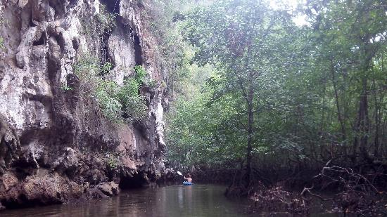 Kayak Tour at Ao Thalane by Krabi Trek: Entre mangrove et canyon