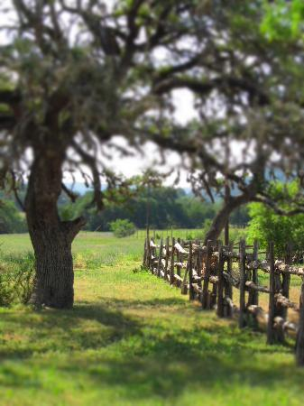 Dixie Dude Ranch: Around the property