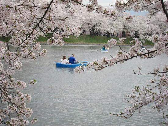 Hirosaki, Japan: Rowing on the boating pond