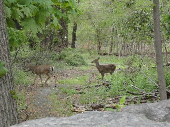 Residence Inn Yonkers: Who would think you'd see deer in Yonkers?  A very short walk from the hotel.