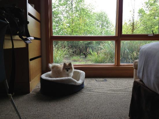 Cedarbrook Lodge: Roxy enjoying the dog bed and treats the staff provided