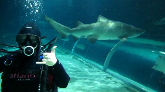 Auckland Central, New Zealand: Awesome! Xtreme Shark Dive