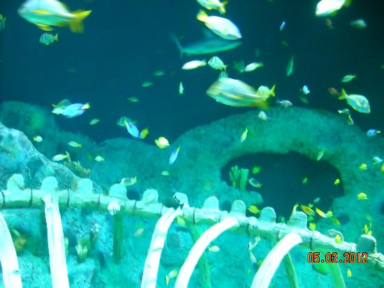 Taken From Inside The Main Tunnel Picture Of Sea Life