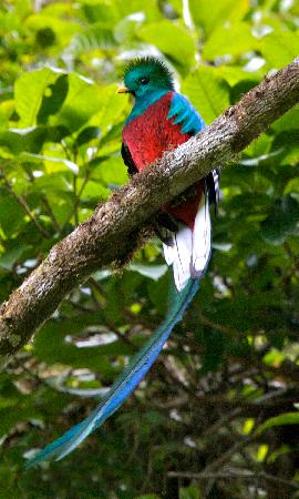 Villa Blanca Cloud Forest Hotel and Nature Reserve: Cloud forest quetzal tour