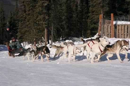 Sirius Sled Dogs Day Tours