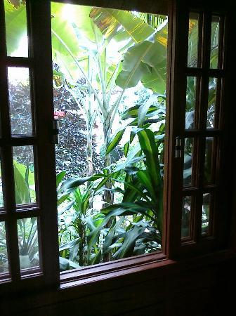 Aratinga Inn: View from the room