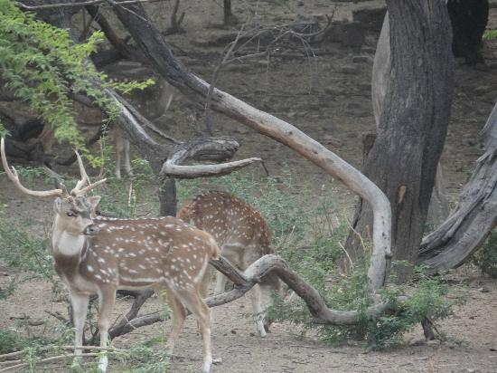 Deer Park Picture Of Hauz Khas Village New Delhi
