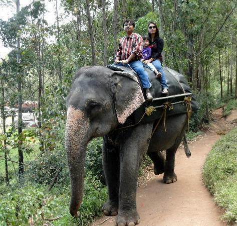 Elephant Ride Picture Of Club Mahindra Munnar