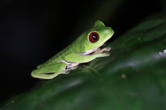 Casa Horizontes Guest House: tree frog
