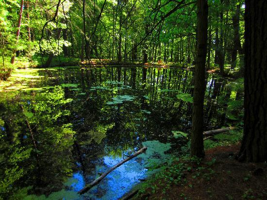 Pond Within The Forest As Still As A Reflecting Pool Picture Of Whiting Forest Midland