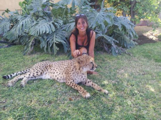 Photos of Otjitotongwe Cheetah Park - Attraction Images