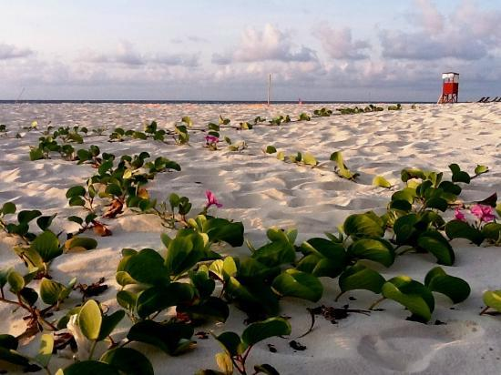 Park Royal Cancun : Walking Found these Flowers Growing on The beach 